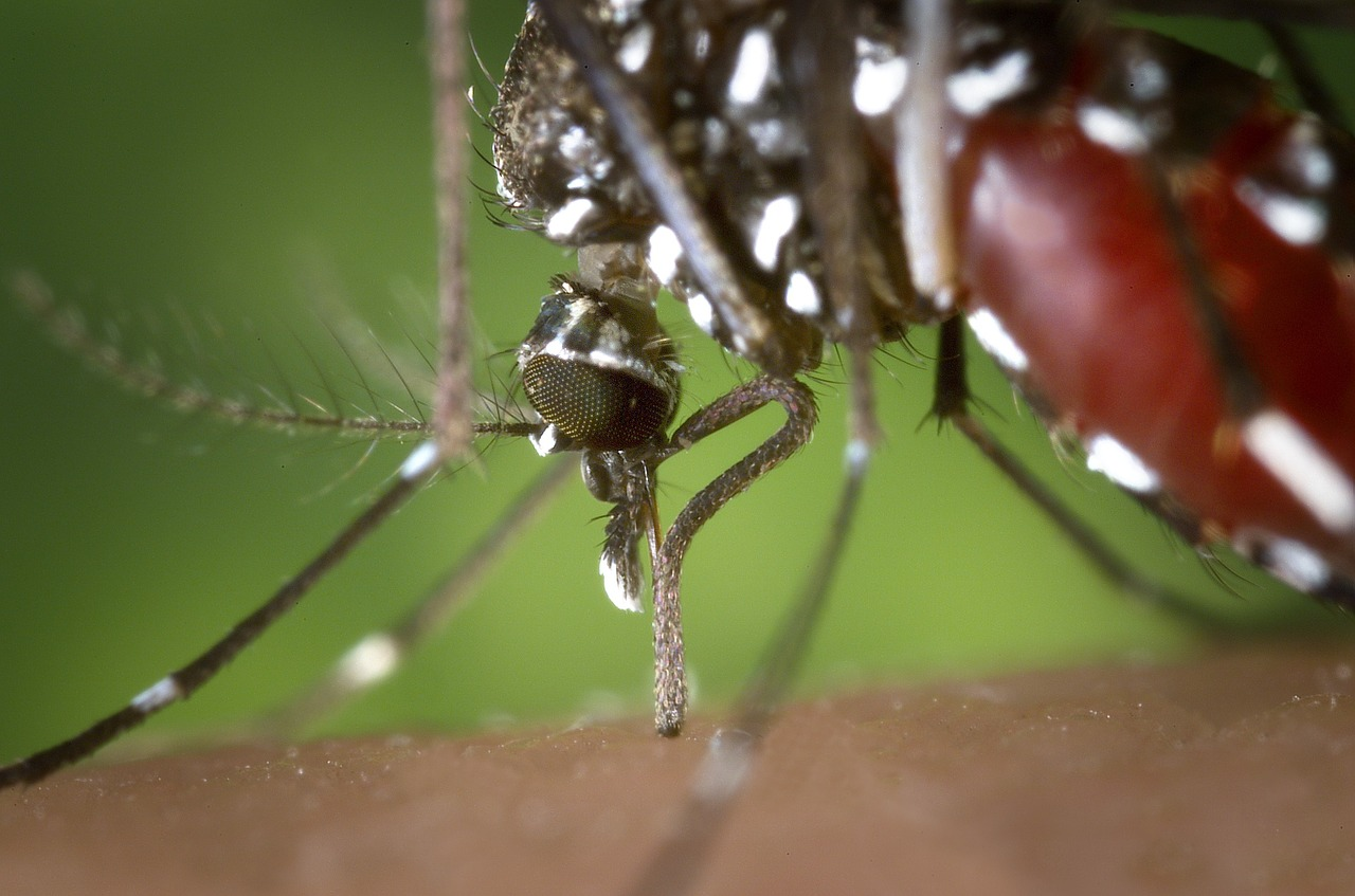 Quels sont les symptômes de la piqûre de moustiques tigre ?