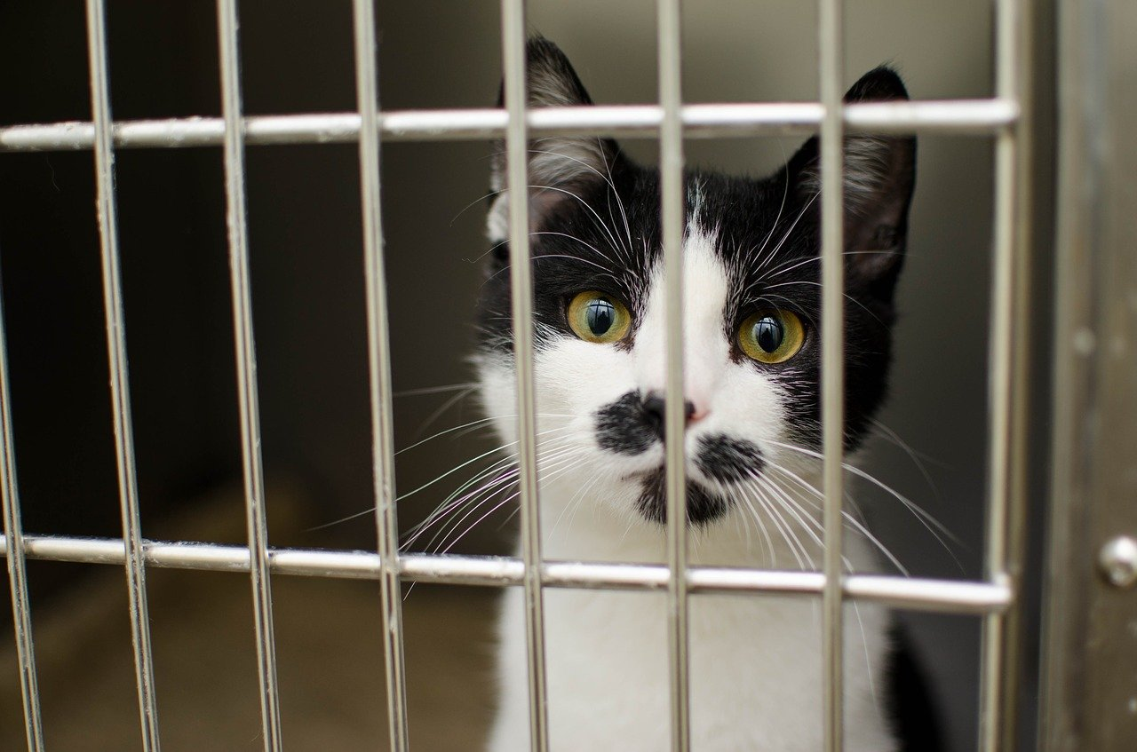 Quels sont les différents types de trappes pour capturer les chats errants?